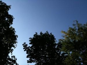20110801-181845.jpg